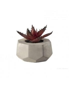 Asa - Декоративно растение...