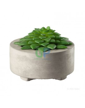 Asa - Декоративен растение...