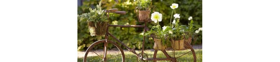 Саксии за Цветя